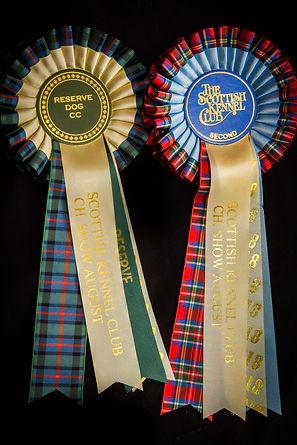 Reserve CC Scottish Kennel Club.