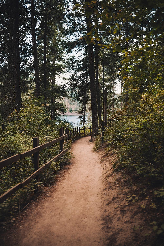 flat-trail-in-woods-near-lake
