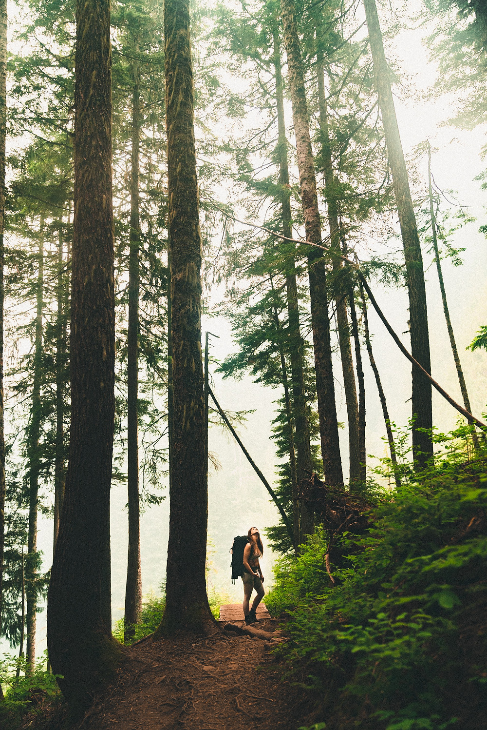 Hiker-looking-up-to-forest-canopy-on-hike