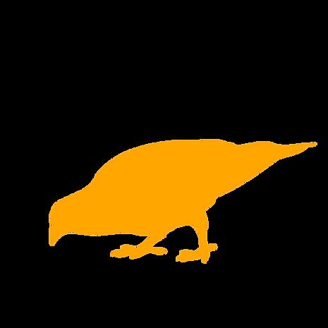D5 orange _
