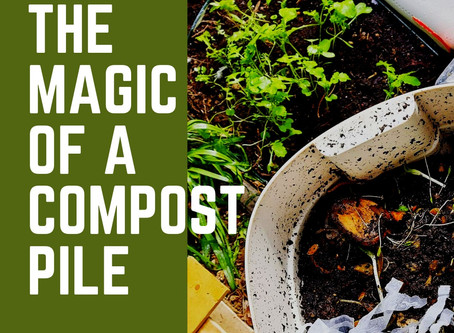 The magic of a compost pile