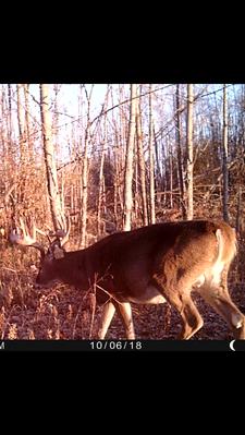 deer 6.PNG