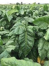 bulk fertilizer Grower consultation fertilizers farming Farm Fertilizer Fertilizers for farming