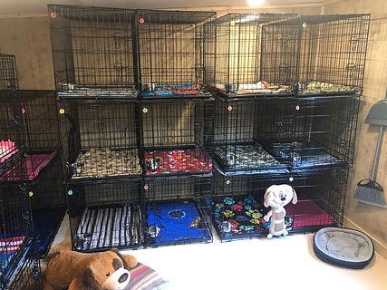 dog daycare, Bark Barn, pamper