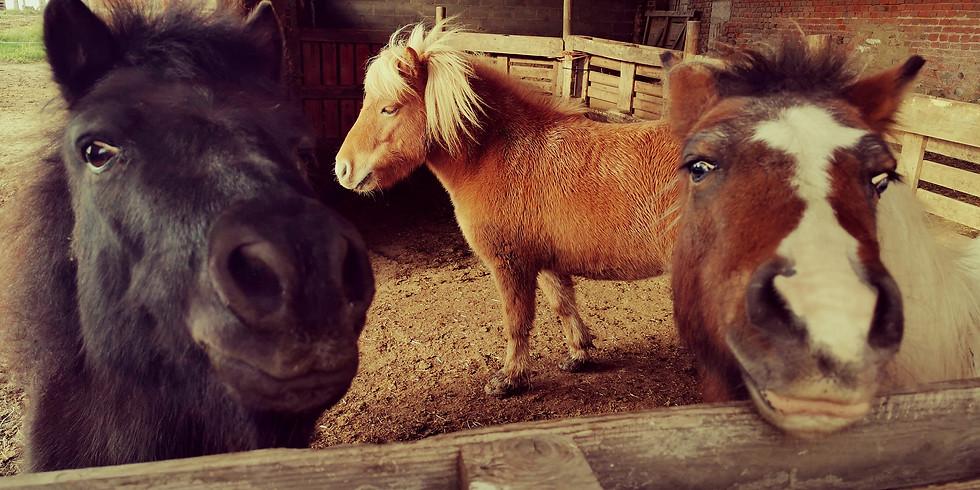 Découvre le monde merveilleux des poneys !