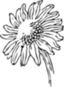 single pic of Sunflower.jpg