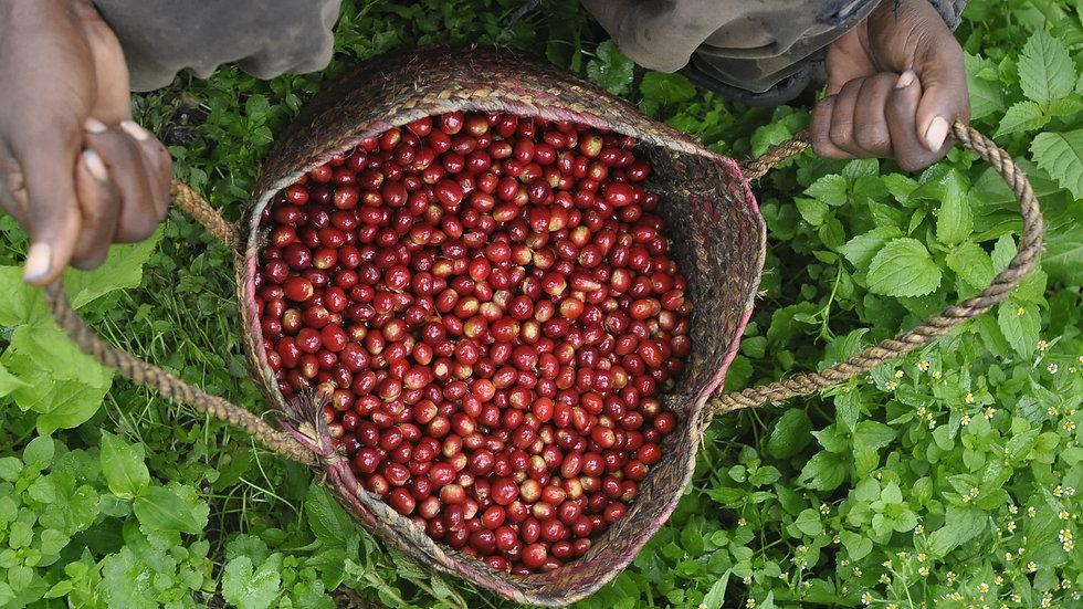 קפה חד זני - אתיופיה דג'ימה