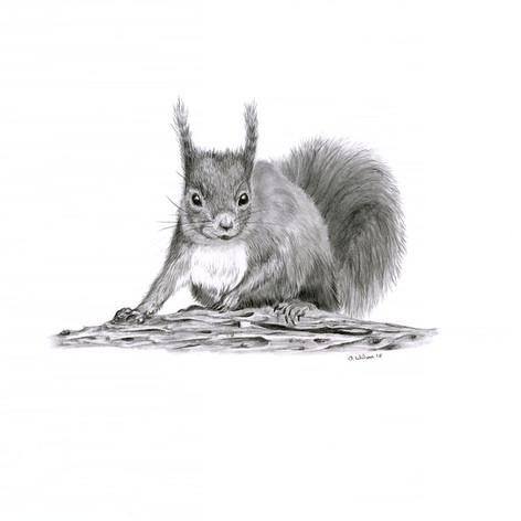Squirrel look small.jpg
