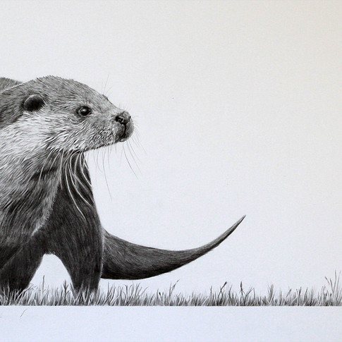 Otter and Dragon.jpg
