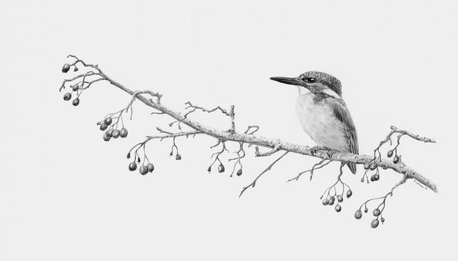 Kingfisher drawing