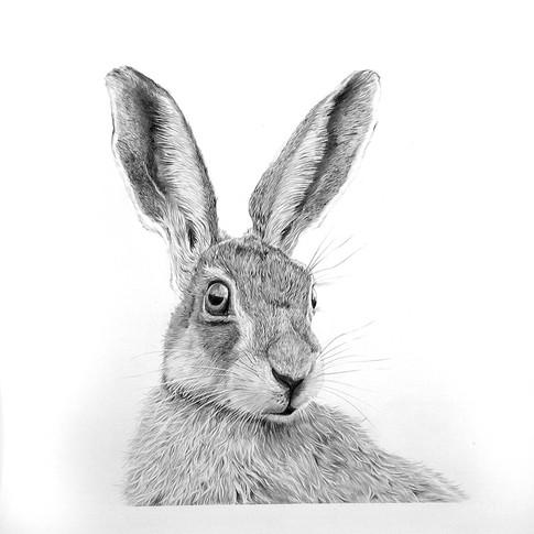 Hare smaller.jpg