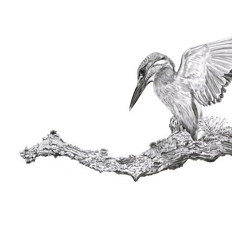 Kingfisher version 2 small.jpg