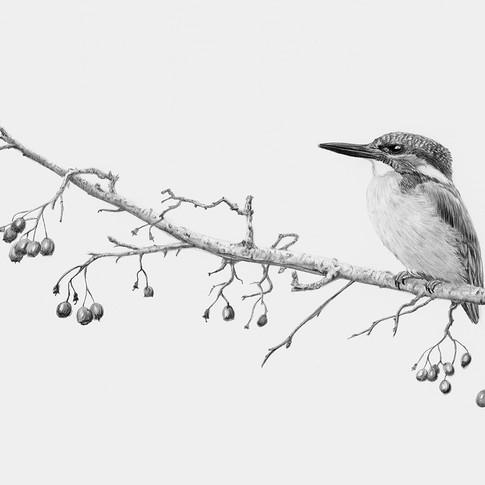 Kingfisher berries small.jpg