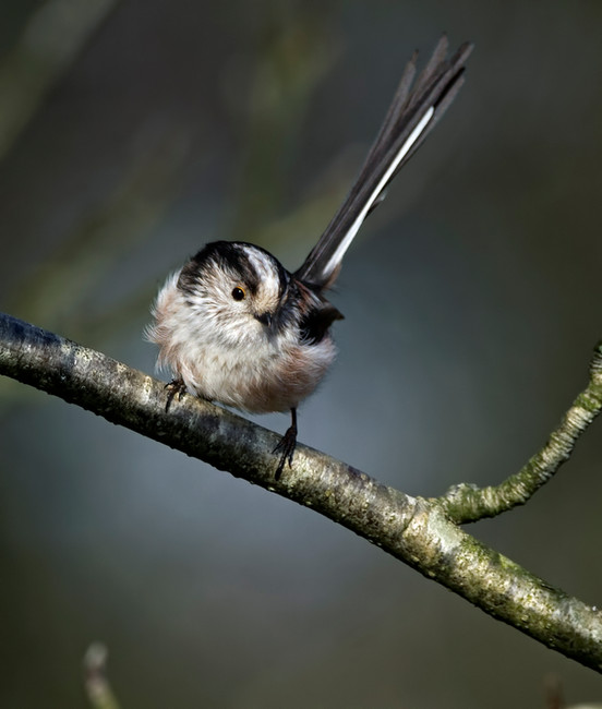 bird (3037).jpg