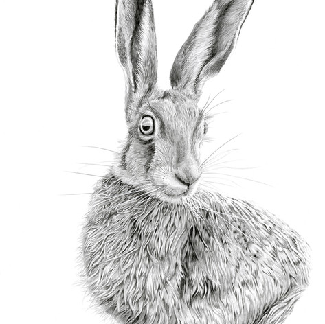 Hare no 2 small.jpg