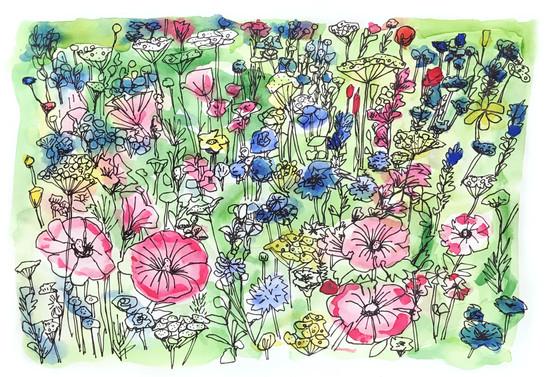 Wild Flowers, Chelsea Physic Gardens