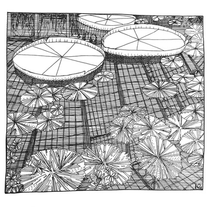 Botanical & Garden Illustrations
