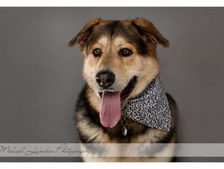 Denzel - Pet Photography