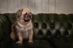 Dog photographs Rupert's