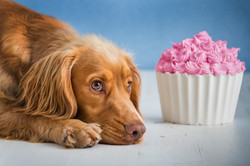 Pet cakesmash photography