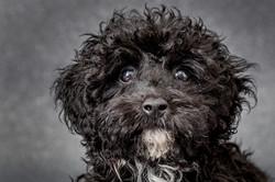 Pet photography Barnsley