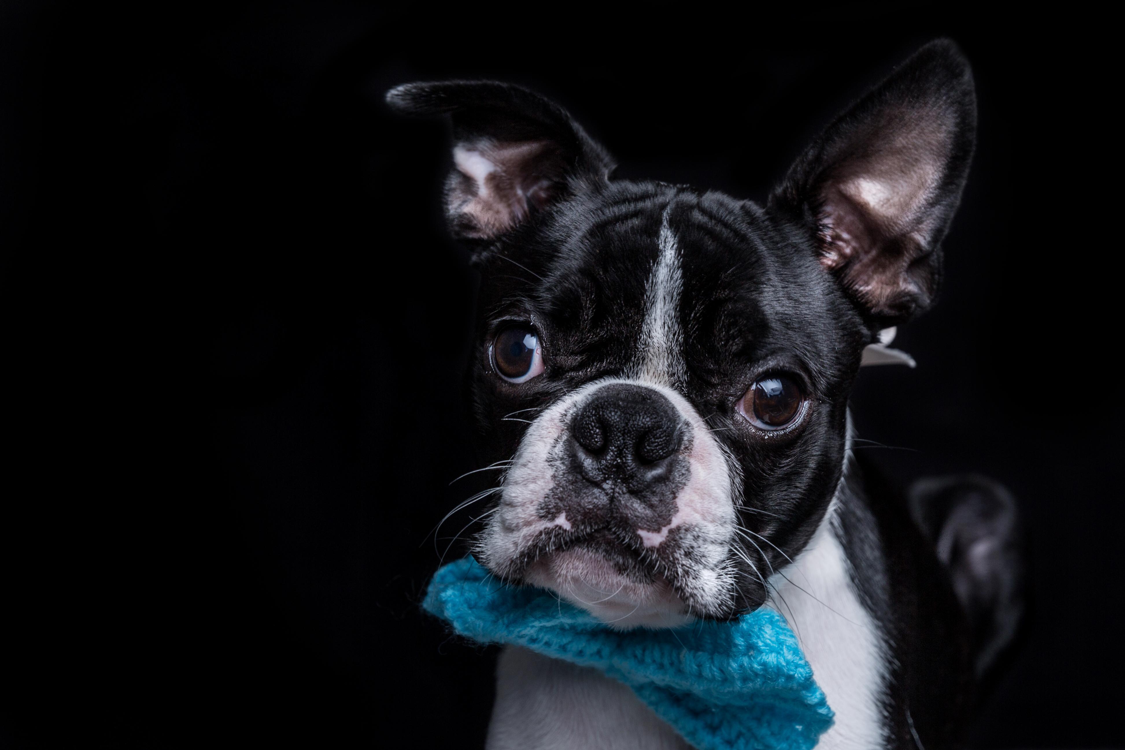 Dog Photographer Shiffield