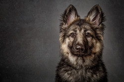 Pet photographer Silkstone