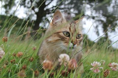 chat médiation animale nature