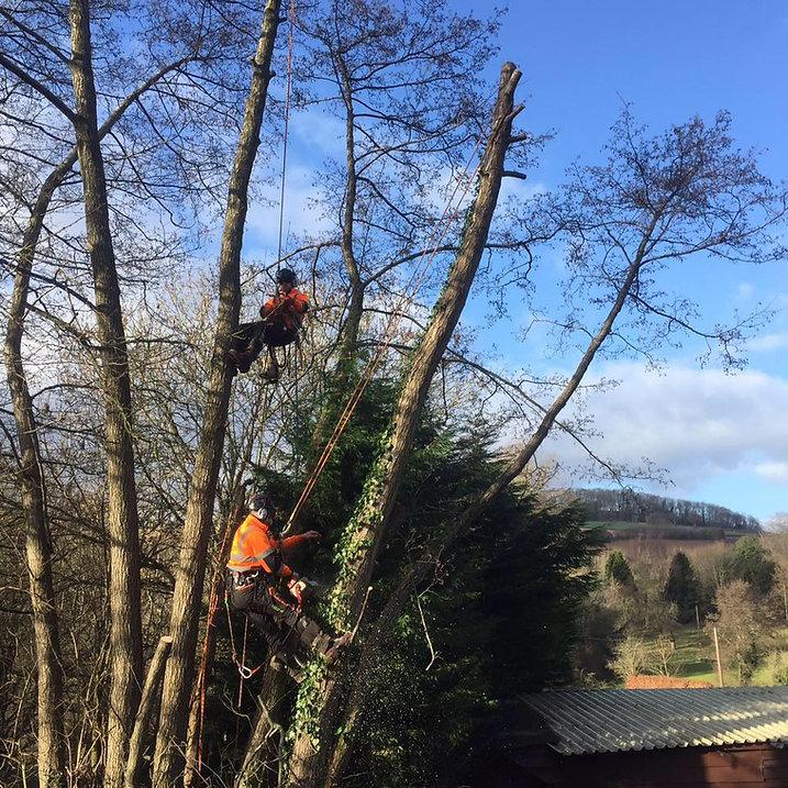 Glantawe Landscapes & Tree Services - Tr