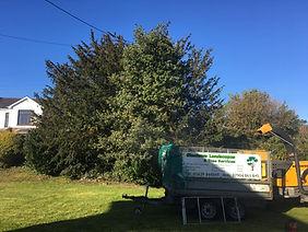 Glantawe Landscapes & Tree Services Tree