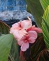 Brittany Botanic 1
