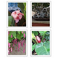 Brittany Photography Note Cards (4 Pack)