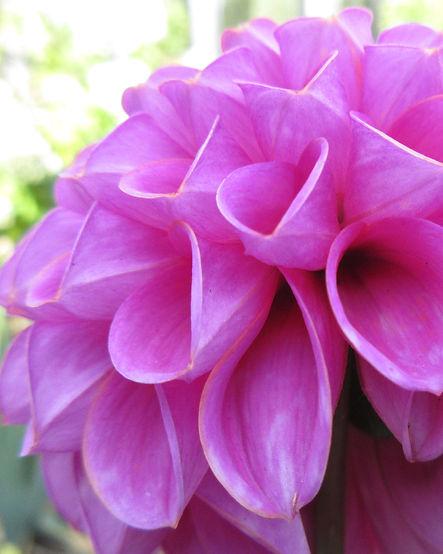 Jocelyn Garden Party Image 1.jpg