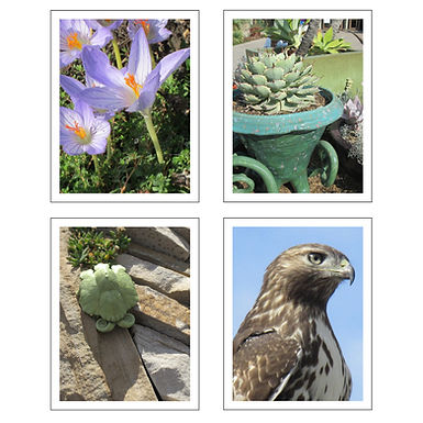 Adam Photography Note Cards (4 Pack)