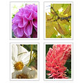 Jocelyn Photography Note Cards (4 Pack)