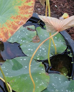 Jareth Botanic 3