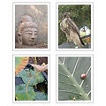 Jareth Photography Note Cards (4 Pack)