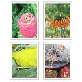 Jaida Photography Note Cards (4 Pack)