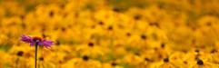 2008-08-17_Planten_un_Blomen_2.jpg