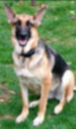 MAD Rescue Dog