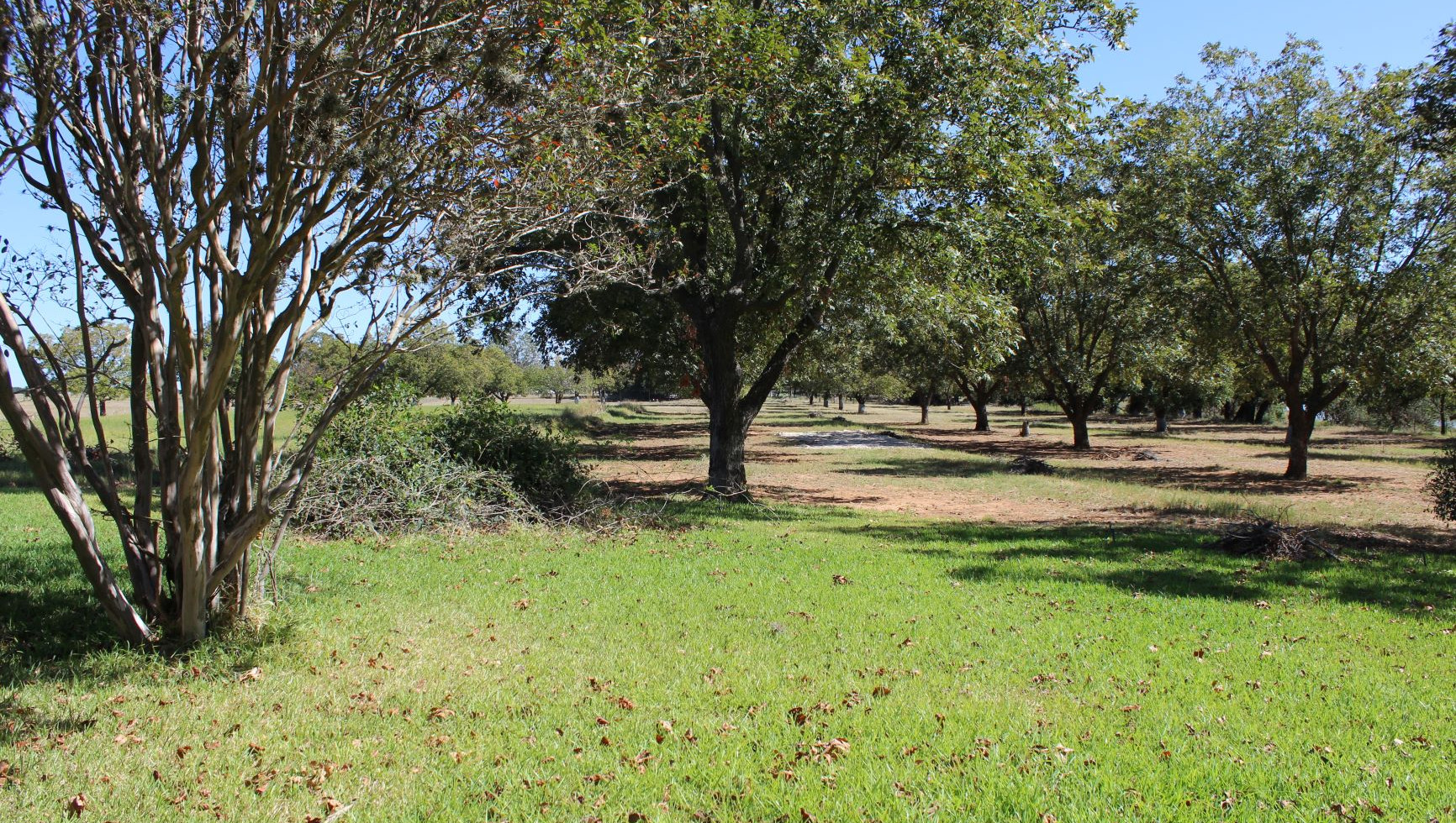 A view of Buddy's orchard today looking east towards the LBJ National Park, aka the Texas Whitehouse  ​