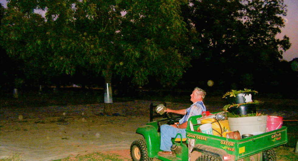 Buddy is admiring his pecan trees after a long day's work.