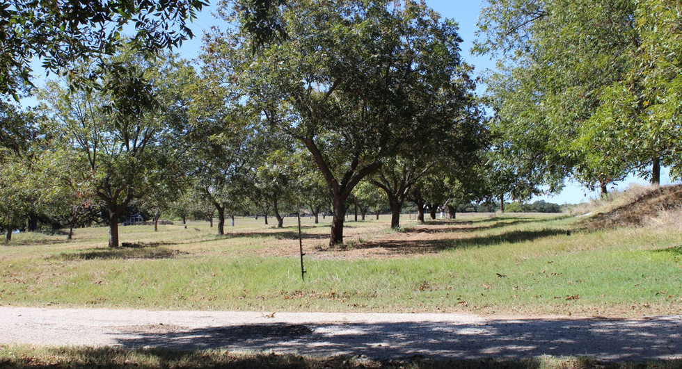 A view of Buddy's orchard today looking west towards the homeplace of Ernest and Marie Hodges (my grandparents)