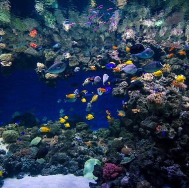Blue Planet - Denmark - Fish