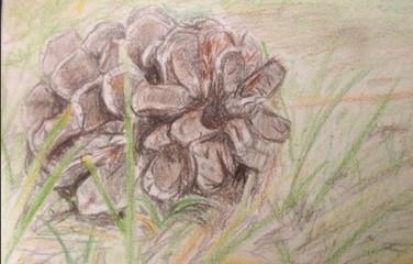 Colored Pencil- 8/2/15