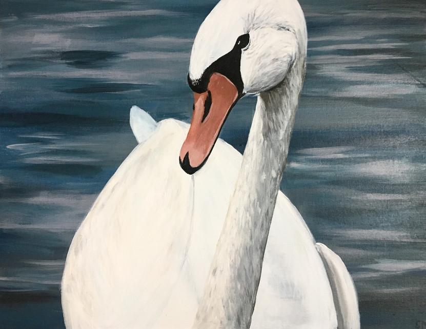 Queen's Swan