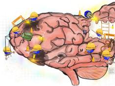 2020 MDBN-Brain_Construction-01.jpg