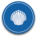 Scallop_Icon.png