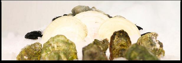 Fresh_Shellfish_Header.png