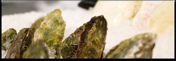 Wholesale_shellfish_header.png